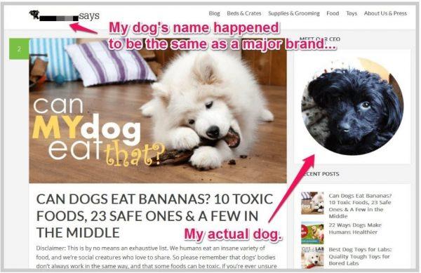 pet blog name